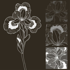 Vector set of black and white iris flower. Decorative elements.