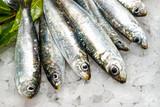 Fototapety Fresh sardines on ice.