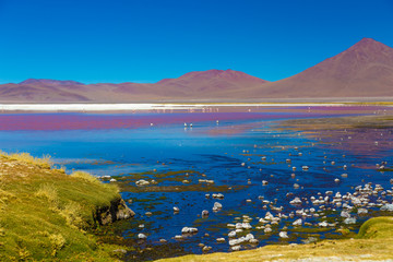 Surreal landscape with flamingos