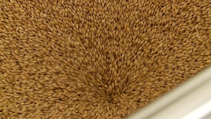 Grinding of malt for producing beer at the brewery.