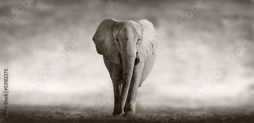 Fototapete Wildtiere - Reh - Hirsch - Wildschwein - Säugetiere - Löwe - Tiger - Elefant - Fuchs - Koala - Giraffe - Poster - Aufkleber