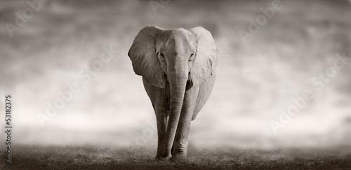 Plagát, Obraz Elephant