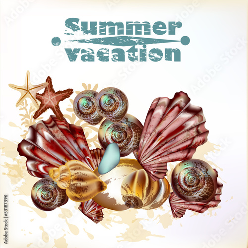 Sea summer background with vector detailed shells for design