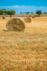 Sheaves of straw, Apulia region