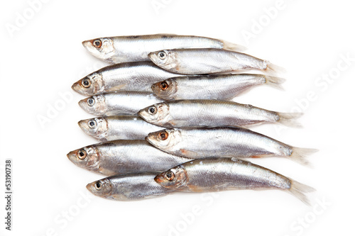 Sprats a small oily fish isolated on a white background - 53190738