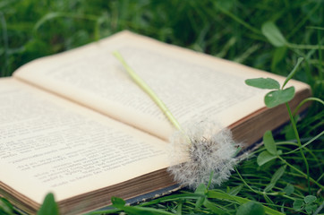White dandelion and vintage book