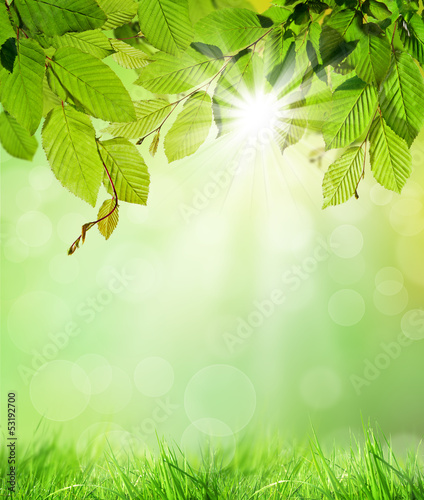 Natural background - 53192700