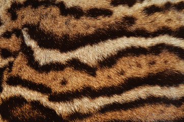 ocelot fur stripes
