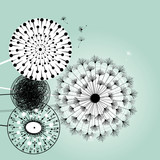 wonderful dandelions