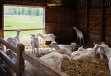 goals in barn