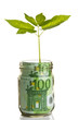 Sapling growing from euro bill