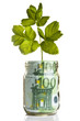 Sapling growing from euro money