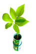 Green plant growing from euro money on white background