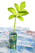 Green sapling growing from euro banknotes