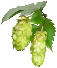 Two Green Common Hops