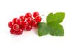 Rote Johannesbeeren mit Blatt