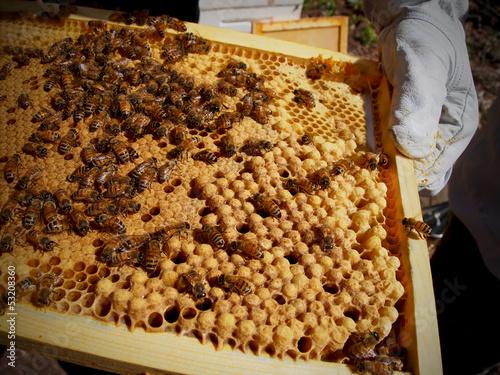 Handling Bees In Frame