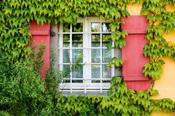 Fenster mit Weinranken