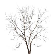 Martwe drzewa na białym tle