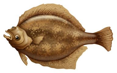 Psettodes Erumei Flounder