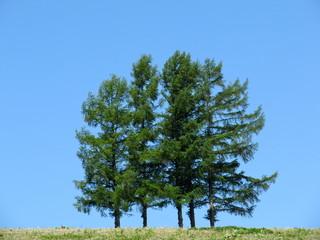 嵐の木:アイドルグループ嵐のCM撮影地の五本松