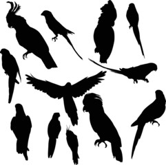 twelve parrot silhouettes collection