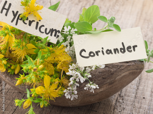 coriander in blossom and st john's wort