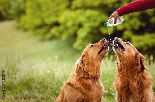 Aluminium Hond Two dogs drink water