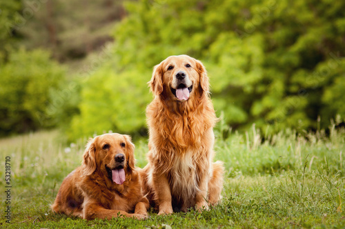 Portrait of a two  dogs