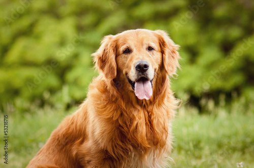 Foto Spatwand Hond Portrait of a dog