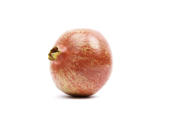 the pomegranate fruit