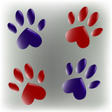 The paws in color