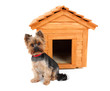 small wooden dog's house and small dog.