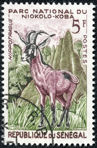 stamp printed in Senegal shows Roan antelope