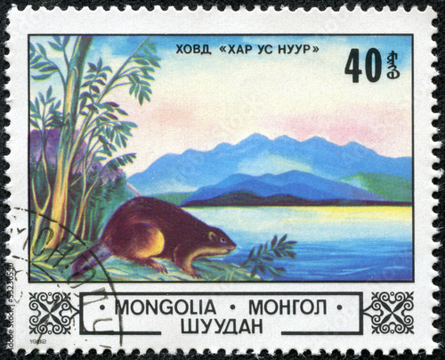 stamp printed by Mongolia, shows beaver