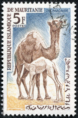 stamp shows Dromedary or Arabian camel