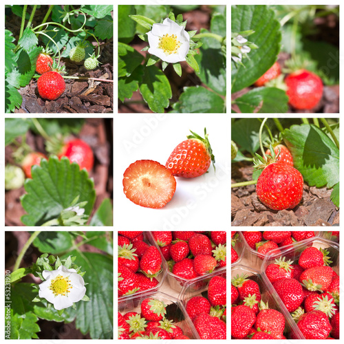 Collage fraises