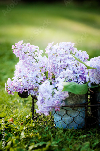 canvas print picture Lilac