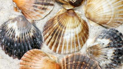 Muscheln - Seashells