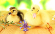 Cute ducklings on bright background