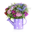 Beautiful bouquet in watering can isolated on white