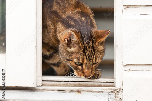 Tabby cat walking out the door.