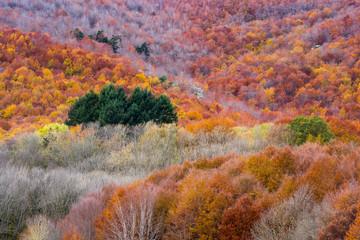 Colores de otoño en el bosque. Montseny.