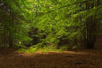 Luz en el bosque de Santa Fe del Montseny.