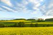 rape field under blue sky