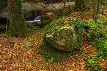 Rincón en un bosque del Montesny.
