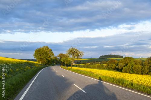 street with rape field under blue sky
