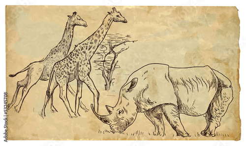 Rhinoceros and Giraffes