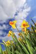 Gelbe Blumen bis zum Himmel