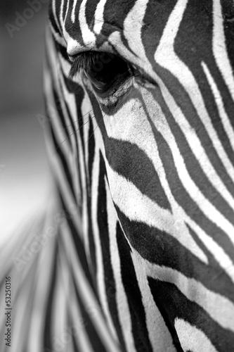 Naklejka Monochromatyczne tekstury skóry zebry